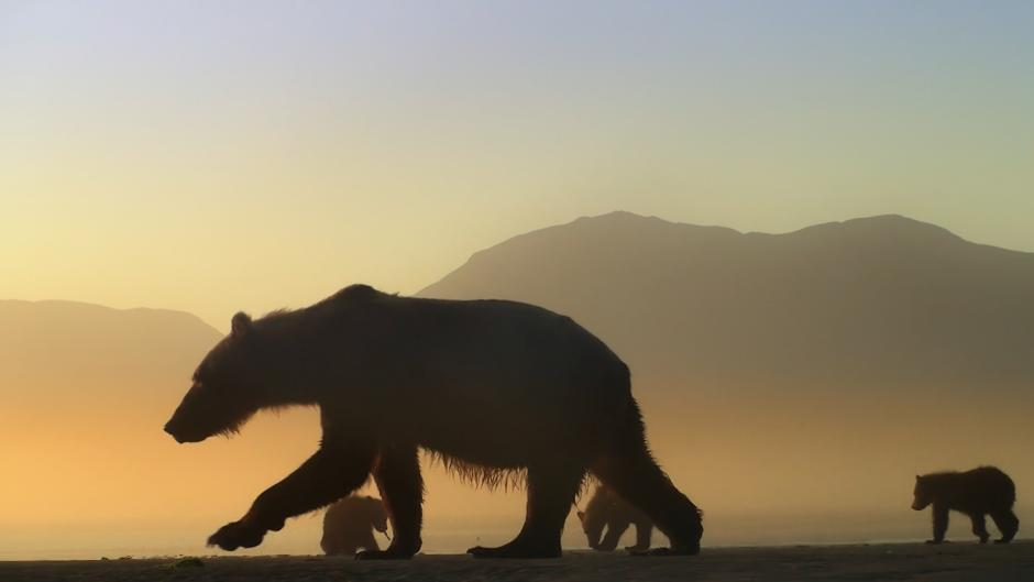 Image from the film Bear-Like