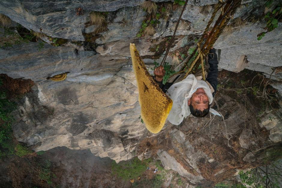 Image of a honey hunter