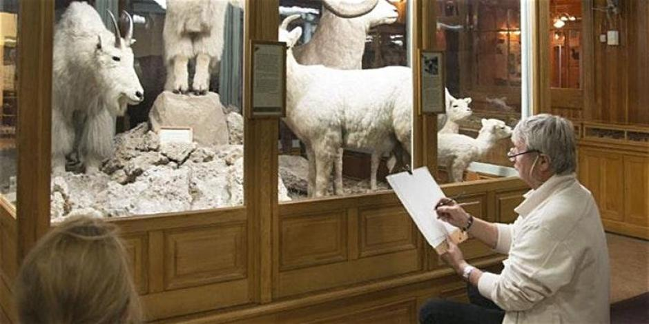 a man sits in in front of a mountain goat display in a museum sketching.