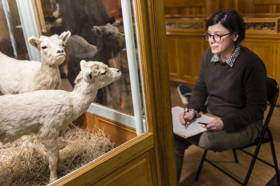 Drawn to Nature participant at the Banff Park Museum draws young mountain goats.