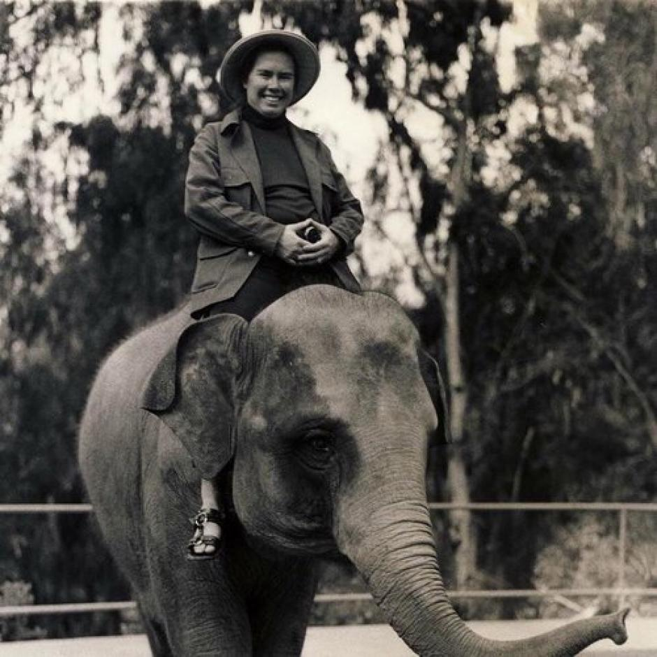 """The Wanderer"" album cover for music by Pauline Oliveros shows a lady astride a small elephant."