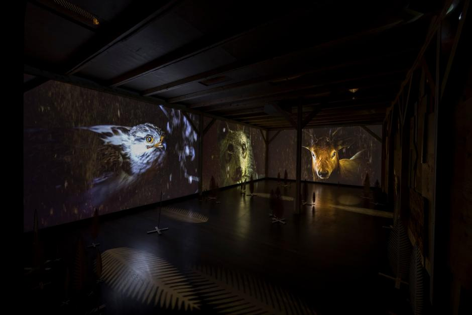 Installation view of Rita McKeoughs exhibition with video projections of wildlife