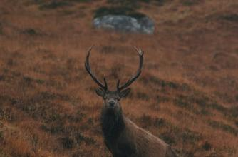 Image from the film The Cull - Scotland's Deer Dilemma