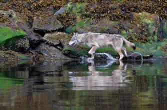 Wildlife Photography of BC's Incredible Coast with Brad Hill