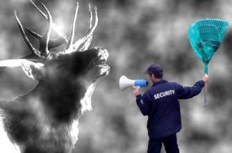How TBC security wrangles elk