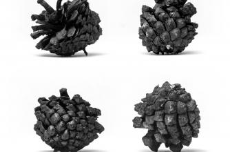 Guillermo Mena's artwork titled Four Pine Cones