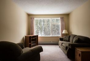 Two sofas and a big bright window looking into a forest.
