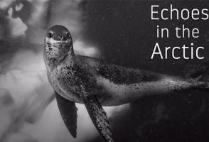 Echoes in the Arctic