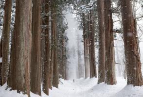Image from the film Treeline