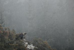 Image from the film Oso, wild vision from Asturias