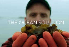 From the film The Ocean Solution