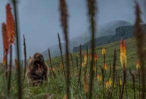 2017 Banff Photo Essay Winner