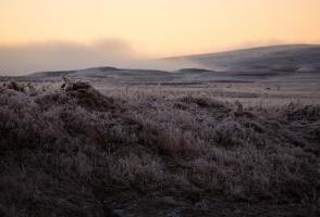 2 Arctic fox pups sit on rocks amongst Arctic tundra