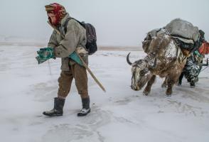 Local Kyrgyz man with yak