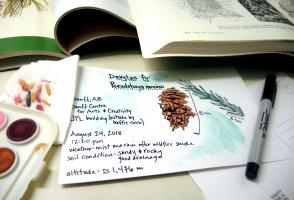 A botanical watercolor of a Douglas Fir cone with description surrounded by various art supplies and reference books.